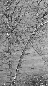 winter_scene-5348