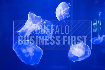 SR-Energy-Jellyfish-JBF