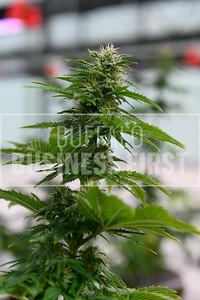 rop-Cannabis Banking-ak