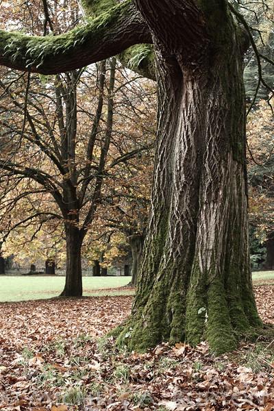 2013-1106_trees IMG_4876