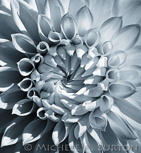 Intricately patterned fall dahlia at Volunteer Park