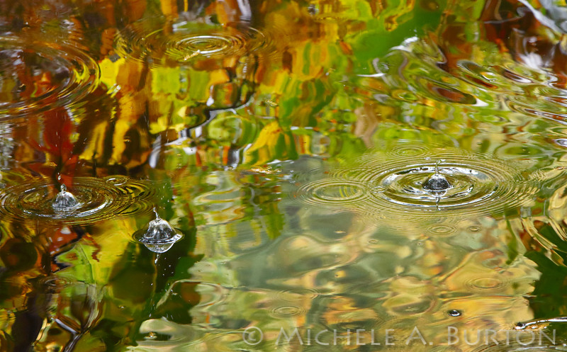 Rain drops hitting the surface of the water in Trillium Park during a fall rainstorm<br /> Olympia, WA <br /> October 15, 2016