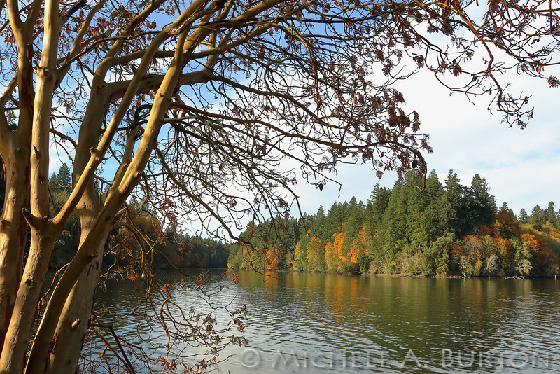 Fall colors and angular light highlight the beautiful landscape at Woodard Bay <br /> Olympia, WA<br /> October 22, 2016