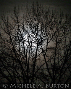 Full Moon Rising through Cottonwood branches - March 1, 2018