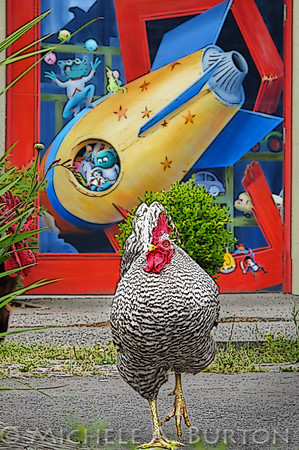 Chicken in front of Toy Store at Country Village