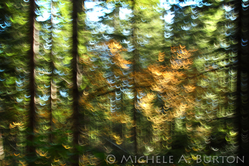 Vine Maple Abstract Landscape<br /> <br /> Mount Rose Trail<br /> Lake Cushman, WA<br /> <br /> November 16, 2014
