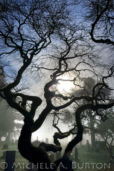 Morning Fog at Seattle's Lake View Cemetery<br /> <br /> February 9, 2016