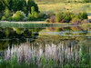 Dusk at the wetland pond<br /> <br /> Pearrygin Lake State Park<br /> Methow Valley, Washington<br /> <br /> May 30, 2014