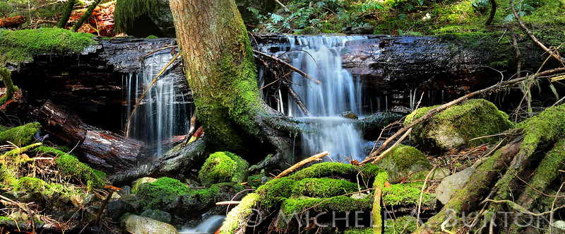 Tiny waterfall along the trail of our Sunday hike<br /> <br /> Highway 410<br /> near Greenwater, WA<br /> <br /> May 3, 2015
