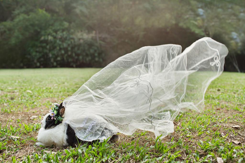 《寵物婚紗》誰說毛小孩不能拍婚紗 / 毛小孩婚禮