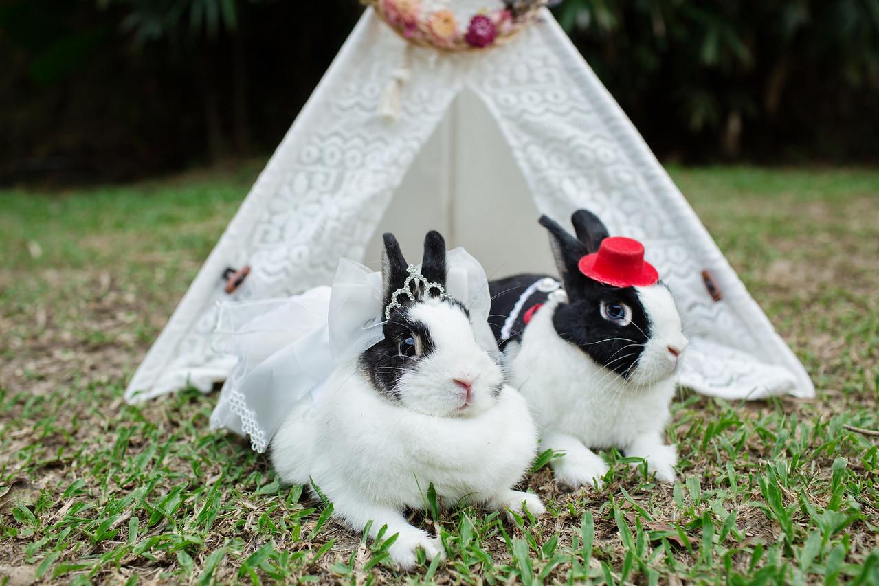 《寵物攝影》毛小孩主題婚禮兔兔結婚了 / 兔子兔兔