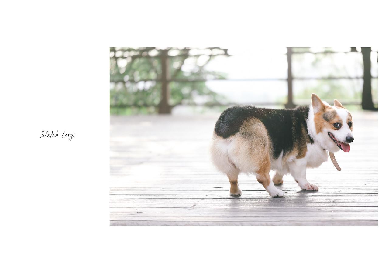 寵物,寫真,毛孩,攝影,狗狗,喵星人,汪星人,寵物攝影價格,台北,柯基犬,寵物寫真,黃金獵犬寫真,柴犬,米克斯,毛孩婚,沙龍,戶外寫真,婚紗,家族,九百家