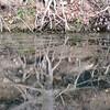 5. tree root