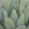 16. look at the texture on this plant