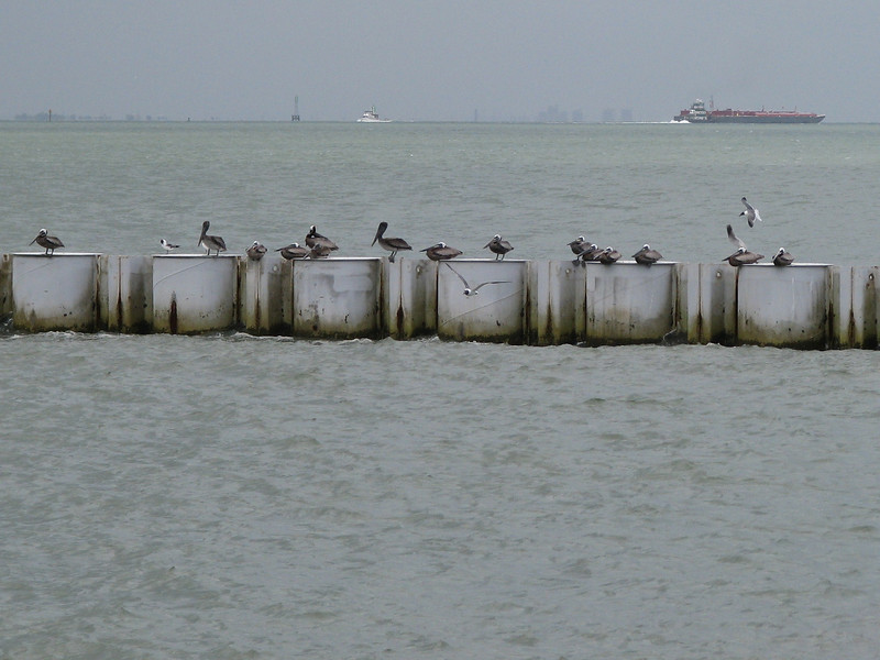 1. We begin by taking the ferry to Galveston. There are always birds watching to see who gets on the ferry.