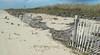 dune fence line