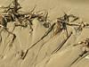 more sandy detritus