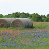 Hay bales with bluebonnets