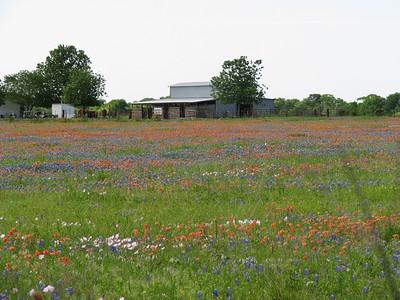 Texas wildflowers April 08