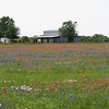 A field of Texas wild flowers somewhere near Brenham on Hwy 105