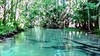 Wekiwa River Video