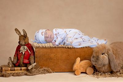 Enzo Bunny--2