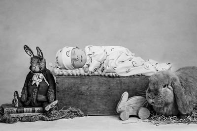 Enzo Bunny--3