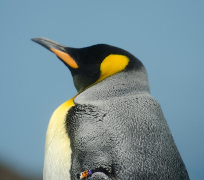 Penguin, SeaWorld, San Antonia Texas