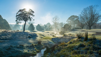 Images capured in the early morning fog on a frosty mornng at Royal Wellington Golf Club, Heretaunga, Wellington, New Zealand on Sunday, 16 July 2017. Copyright: John Mathews 2017.  www.megasportmedia.co.nz