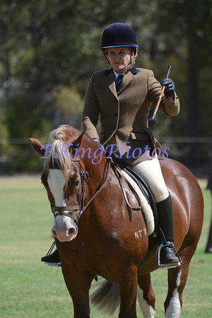 2014 Welsh & Part Welsh Newcomer Stallion