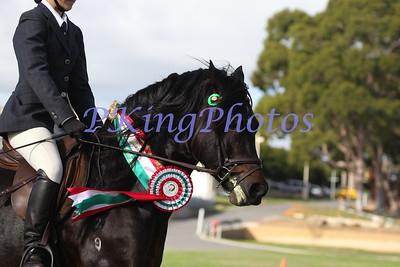 2015 Welsh & Part Welsh Newcomer Stallion