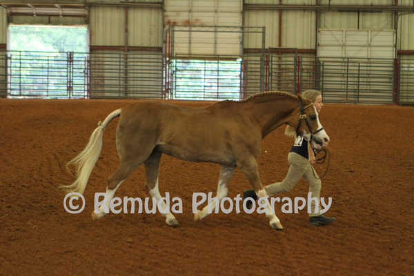 Welsh Pony Shows