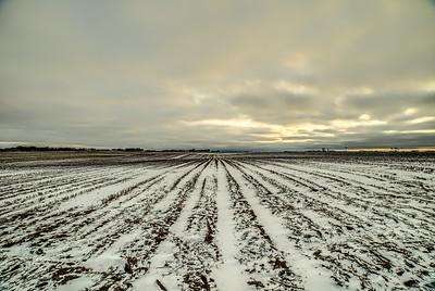 Wencl Farm