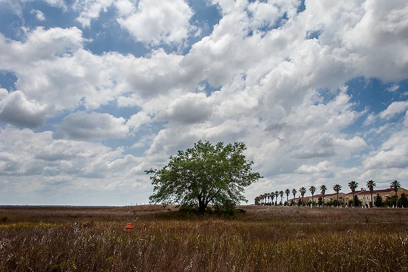 01  Anna_Colliton_The_Tree_That_Grew_Itself