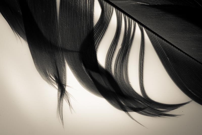 CAROL_HORIGAN_The Shape of   Flight_Serenity