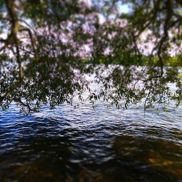 Missy_Gaido_Allen_Lake_Malaren