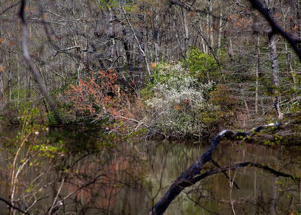 Wenonah Lake in Spring