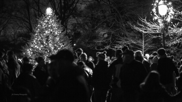 Christmas Tree Lighting in the Park