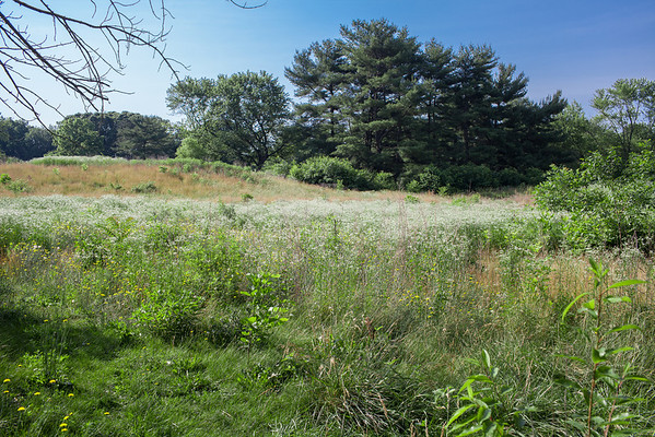 Save Maple Ridge J.R. Dominy JerseyPix Wenonah New Jersey Landscape Canon 35L Tall Pine State Preserve, Mantua, New Jersey