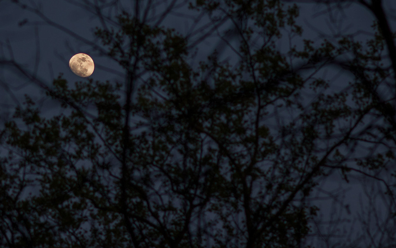 Moon in the Woods