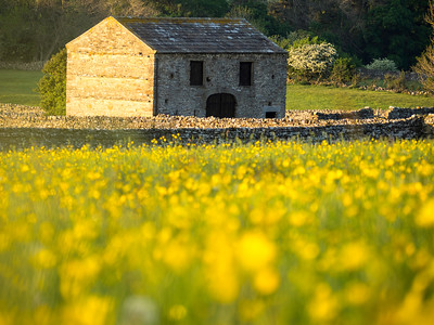 Spring meadow near Aysgarth-copyright muscroft (7)