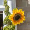019 - Wentbridge House - Tour De Yorkshire - 300416