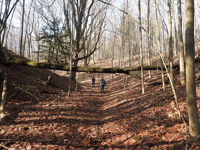 Forest along small ravine which feeds into a large ravine , in Area 4 (Photo by Don McLeod)