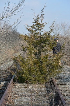 Tree growing on rail line, in Area 3 (Photo by Thomas Jackman)