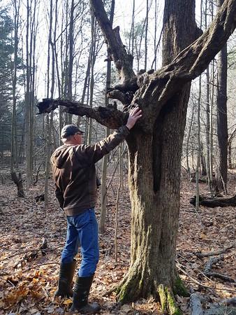 Tree, in Area 4 (Photo by Frank Godfrey)