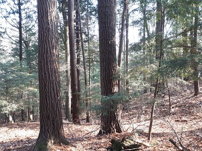 Trees , in Area 5 (Photo by Jennifer Jackman)