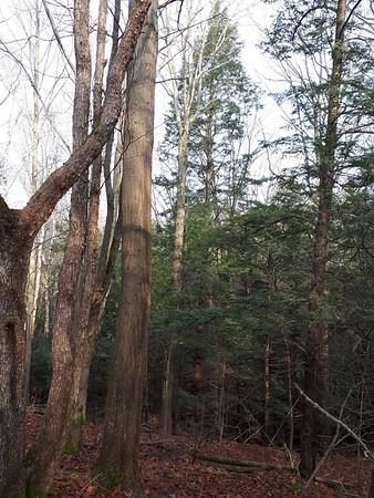 Trees, in Area 5 (Photo by Jennifer Jackman)