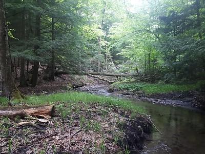 Creek in base of west ravine in Area 5 - Photo by Jenny Jackman