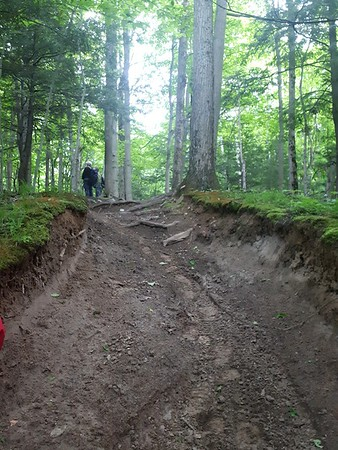 ATV damage in old growth area - Photo by Jenny Jackman