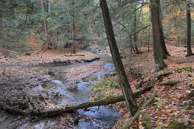 20 Brook trout habitat west ravine